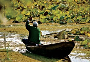 Picture perfect: Sawant Singh captured this shot of a shikara in Kashmir.