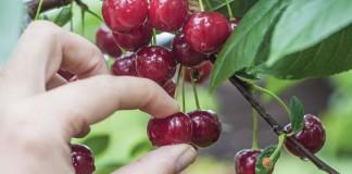 001c cherry