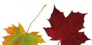 India Canada bilateral trade investment