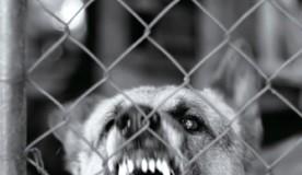 Fierce_dog
