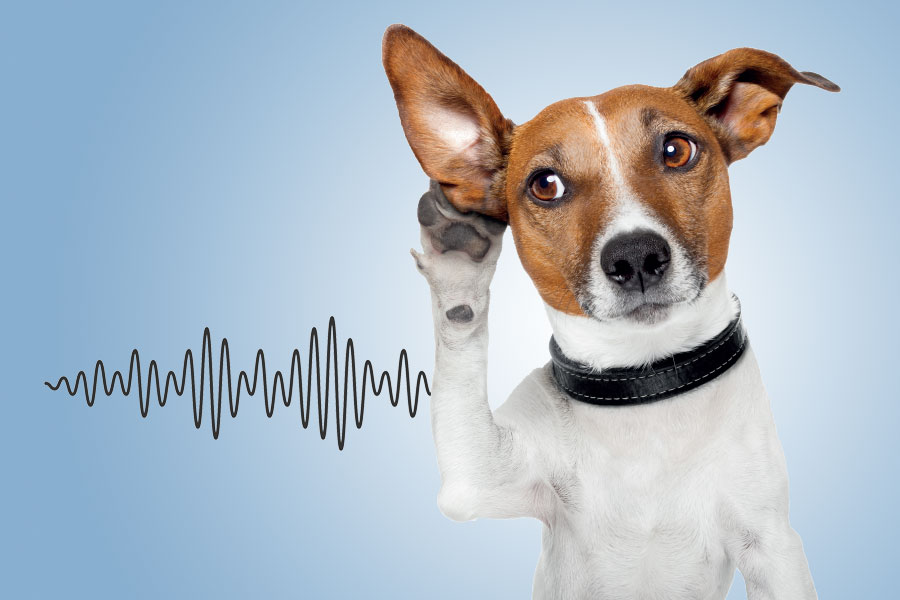 Thailand listening for sound marks | Asia Business Law Journal