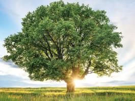 以市场为主导的环境监管方式-Market-oriented-approach-to-green-regulation