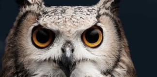 Owl-night-asia-business-law-hong-kong
