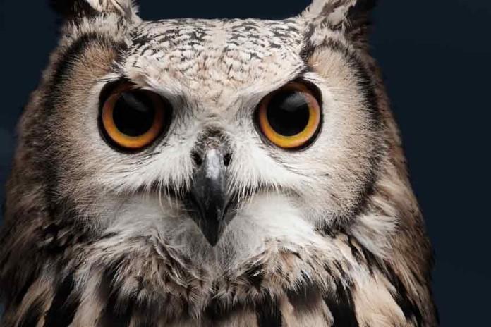 Owl-night-asia-business-law-hong-kong
